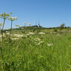 View towards Turners Hill (image © Mike Poulton)