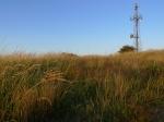 Grasses (image © Mike Poulton)