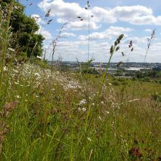 Rowley Hills grassland (image © Mike Poulton)
