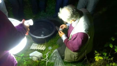 Portway Hill moth night (image © Mike Poulton)