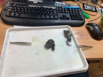 Starting the dissection.